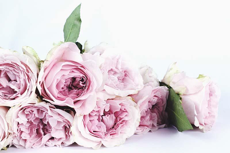 art-floral-anna-111428-unsplash