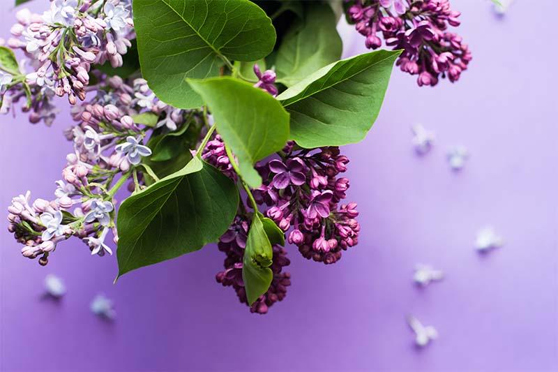 art-floral-juja-han-270083-unsplash